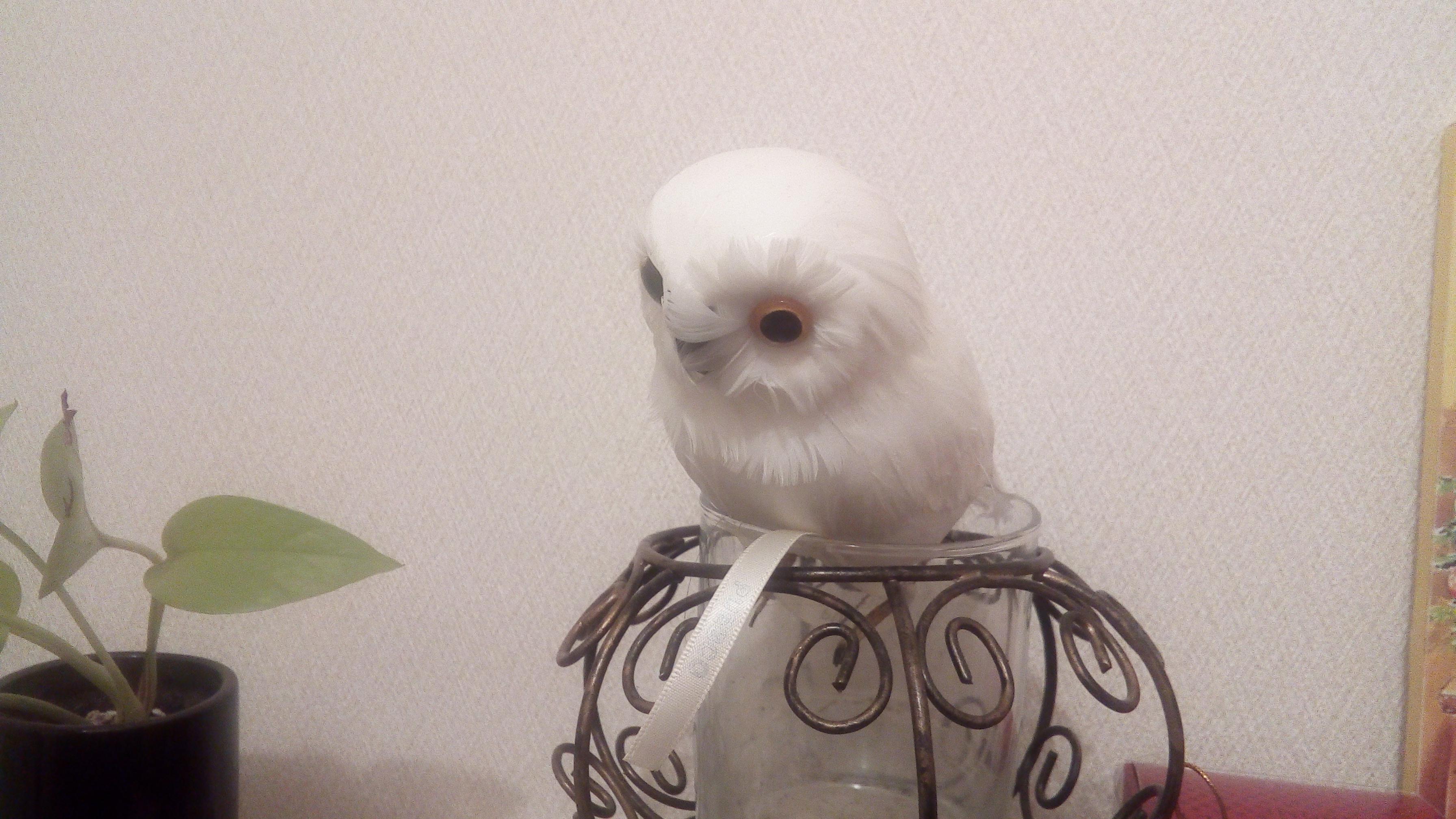 フクロウのオブジェで癒されながら縁起を担ごう PUEBCO(プエブコ)のフクロウ